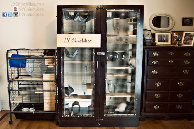 Custom Chinchilla Cages | LY Chinchillas