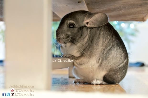 Mitty Under Couch