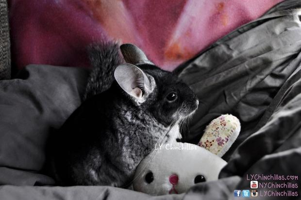 Muff Cuddle Buddy