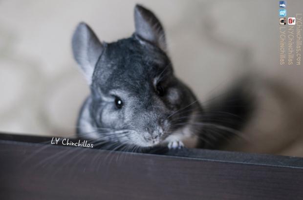 Cutie Mitty
