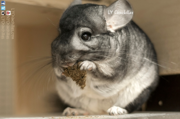 Mitty Eating Cookie