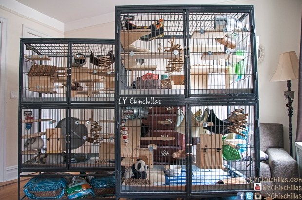 Ferret Nation Chinchilla Cage