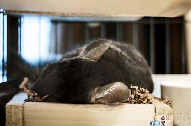 Muff Sleeping Litter Bxo