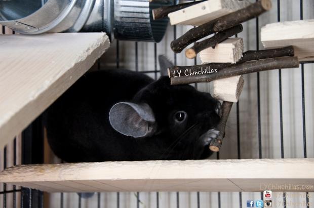 Koko Hanging Toy