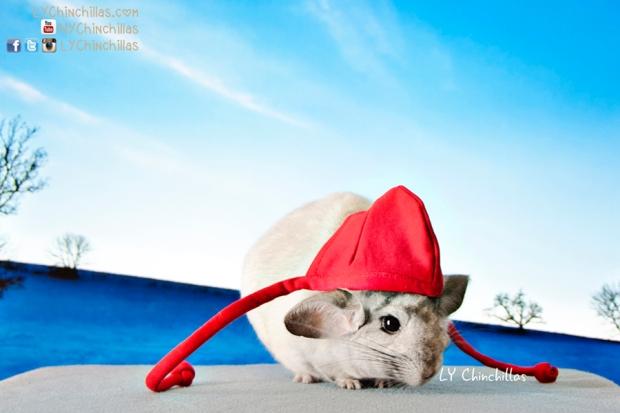 lulu chinchilla hat