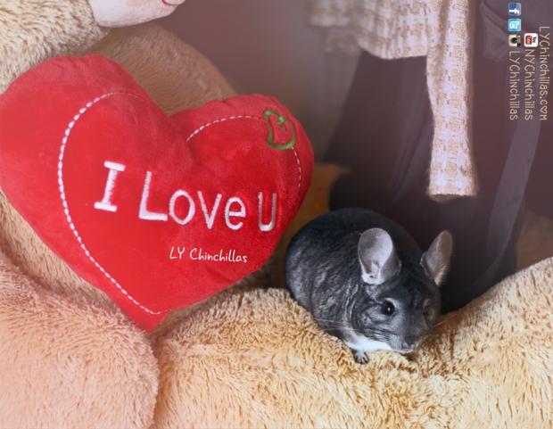 mitty love pillow chinchilla