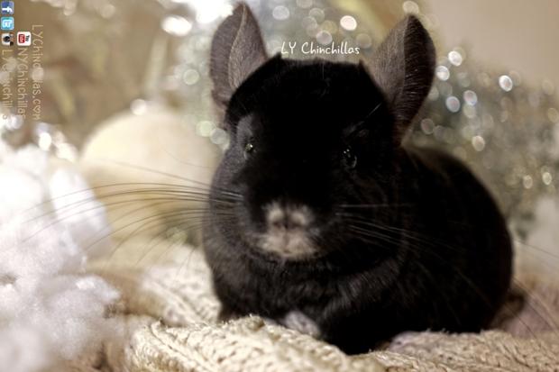 Koko Cute Head Warm Holidays
