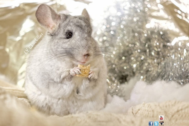 Lulu Munching Warm Holidays