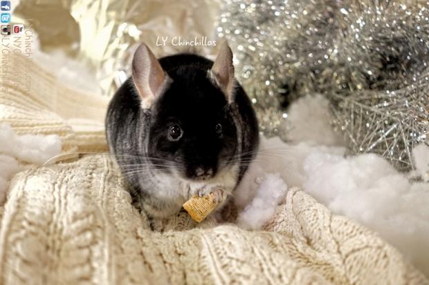 Muff Holiday Warm Eating